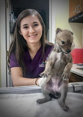 vet tech and coyote